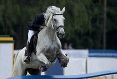 Rid- sportar, häst som hoppar, show som hoppar, hästridning royaltyfri foto