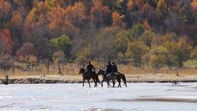Rida en häst stock video