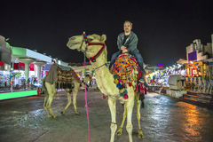 Rida en kamel Royaltyfria Foton