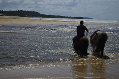 Rida på stranden Arkivfoto