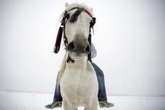 rida vinter Royaltyfri Fotografi