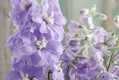 Ridderspoorbloemen Stock Afbeeldingen