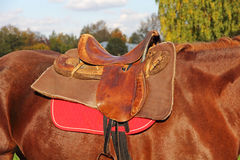 Ridding saddle on a brown horse. Stock Photos
