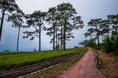 Ride bicycle retribution. In the forest Pine Stock Photo