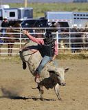 Ride that Bull. Young bull riding a bucking bulll at a rodeo Stock Photography