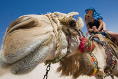 Ride on the camel. Two girls are ride on camel in desert Royalty Free Stock Photos