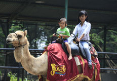 Ride camel Royalty Free Stock Photo