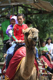 Ride camel Royalty Free Stock Images