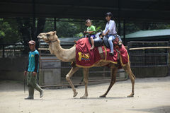Ride camel Royalty Free Stock Photos