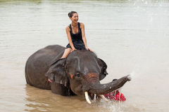 Ride an elephant Stock Images