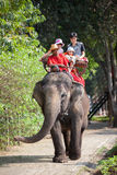 Ride on an elephant Stock Photography