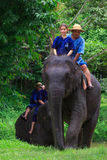 Ride an elephant Stock Photos