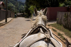 The ride. A horse-drawn carriage tour on the farm stock images