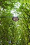 Ride Lamppost Trees Stock Photos