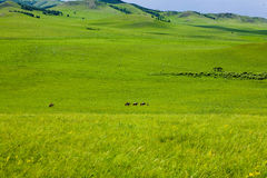 Ride On The Broad Grassland Royalty Free Stock Photo