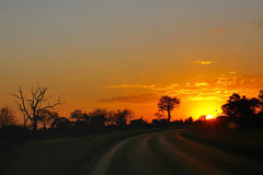 Ride into the sunset. Road in Kruger National Park leading into sunset Royalty Free Stock Photography