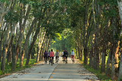 Cycling on the way. A group of people who ride bicycles in the rubber garden Stock Photography