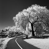 Rideau canal in infrared Stock Images