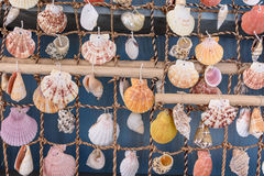 Rideaux de belles coquilles colorées de mer de la mer Photos libres de droits