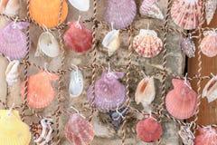 Rideaux de belles coquilles colorées de mer de la mer Photographie stock libre de droits
