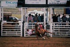 Ridem Cowboy OOOOOOOPPPPPSSSSS Stock Image