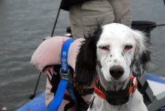 Riden ut hund Arkivbild