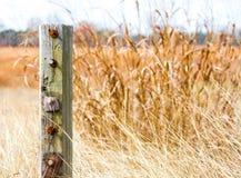 Riden ut trästolpe i guld- präriegräs i Texas arkivbild