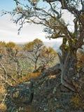 Riden ut treelastbil i steniga ökenberg Arkivfoto