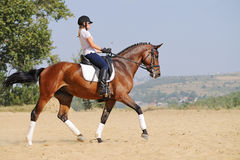 Rider on bay dressage horse, going trot. Equestrianism: rider on bay dressage horse, going trot Stock Photos