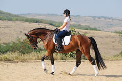 Rider on bay dressage horse, going walk. Equestrianism: rider on bay dressage horse, going walk Royalty Free Stock Photos