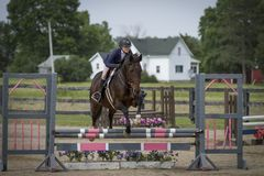 Rider and gelding over pink and grey oxer. Rider and bay gelding over a pink and grey oxer Stock Images