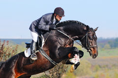 Rider on bay horse in jumping show Stock Photography