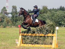 Rider on bay horse in sports jumping show. Rider and horse in equestrian jumping obstacles on show course Stock Photography
