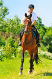 Rider on bay sportive horse. In the field Royalty Free Stock Photography