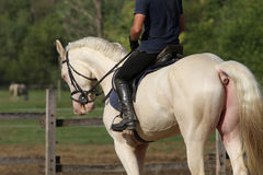 Rider and a beautiful dressage horse galloping in the corral Stock Images