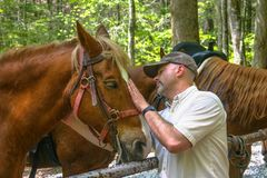 Rider caring for his horse on the trail. royalty free stock photos