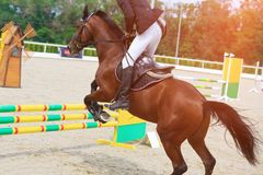 Rider on a chestnut horse jumps over a barrier in jumping competition Stock Photos