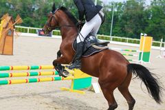 Rider on a chestnut horse jumps over a barrier in jumping competition Stock Image