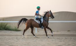 A rider competing in a desert endurance race. Dubai, UAE - Sep 30, 2017: An athletic rider competing in a long-distance endurance horse race in the desert at stock photos