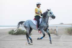 A rider competing in a desert endurance race. Dubai, UAE - Sep 30, 2017: An athletic rider competing in a long-distance endurance horse race in the desert at royalty free stock photos