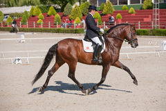 Rider competing in dressage competition classic Royalty Free Stock Photography