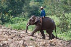 Rider elephant Royalty Free Stock Photography