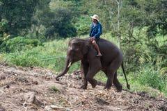 Rider elephant Stock Photography