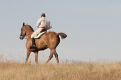 Rider in the field Stock Image