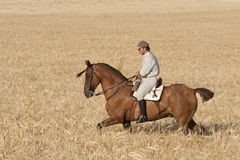 Rider in the field of barley Stock Photos