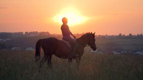 A rider goes on a horse, slow motion. Female rider goes on her horse through the field on a sunset background stock video