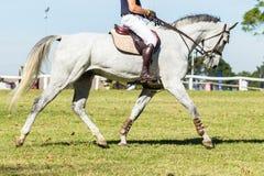 Rider Gray Horse Unidentified Fotografia Stock