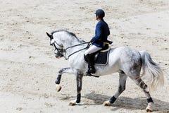 Rider on grey horse Royalty Free Stock Image