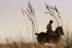 Rider with his horse into the sunset Royalty Free Stock Image