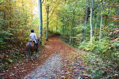 Rider on horse. In a forest in autumn in Denmark Stock Photography